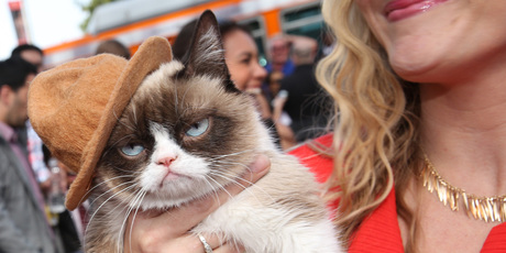Grumpy Cat. Photo / AP