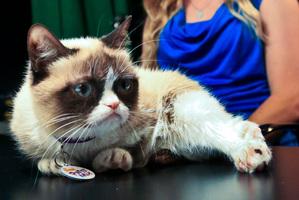 Grumpy Cat and her owner Tabatha Bundesen. Photo / AP