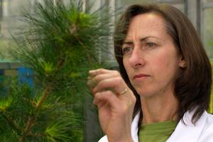 Hort Research scientist Louise Malone's research has included possible effects of GM pine trees on insects.
