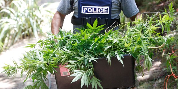 Police found 14,500 cannabis plants along with cash and firearms.