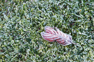 Frost, Whau Valley PHOTO/Michael Cunningham