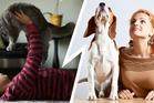 Cat people vs dog people. Photo / Thinkstock
