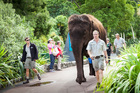 Burma the elephant will be centre stage for Auckland Zoo's Elephant Weekend on June 7 and 8. Photo / Auckland Zoo