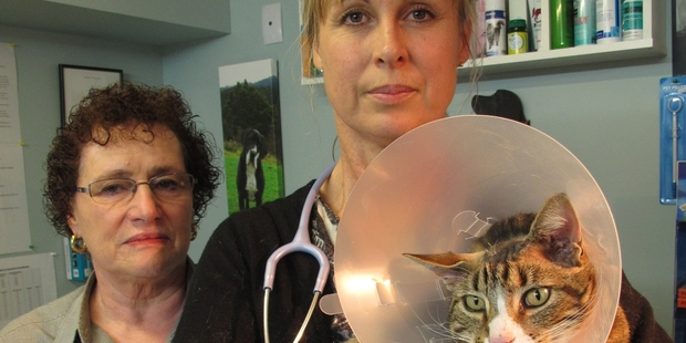 HEAD SHOT: Lorraine Blignaut with Paihia vet Natalie Struthers and Tigger the cat, recovering from surgery after being shot in the head with an airgun. PHOTO/PETER DE GRAAF