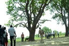 The tree where two teenage girls were found hanging after they were gang raped in Katra village in northern India. Photo / AP