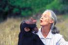 Dr.Jane Goodall with orphan chimpanzee Uruhara at the Sweetwaters Sanctuary in Kenya. Photo / Michael Neugebauer