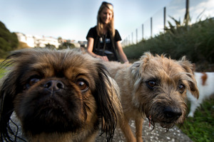 Olivia Howarth from Pets & Pats, a mobile doggie day care company, with some of the dogs she looks after. Photo / Brett Phibbs