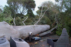 Auckland Zoo is closed today due to storm damage overnight. Photo / Twitter / @aucklandzoo