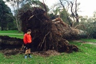 Oscar Burke, 11, next to a massive tree which fell at Seddon Fields in Auckland last night. Photo / Louise Smith