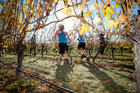The Saint Clair Half Marathon takes runners through some of  the region's wineries.
