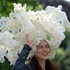 Larisa Katz models a horse motif lace hat on the second day of the Royal Ascot horse racing meeting at Ascot, England. Photo / AP