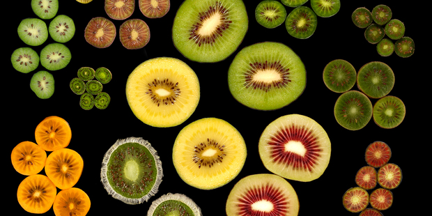 New kiwifruit could change the multimillion-dollar industry.