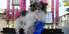 View: Photos: World's ugliest dogs