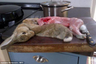The author - who was a vegetarian for nine years - posted a somewhat graphic picture of a carcass on her kitchen counter. Photo / Jeanette Winterson
