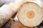 Logs from a rolled truck have spilled across the road. Photo / Thinkstock