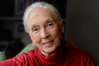 Dr Jane Goodall - scientist, advocate, UN Messenger of Peace - visited New Zealand in June. Photo / Supplied