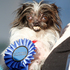 Two-year-old Peanut won the World's Ugliest Dog Contest. Photo / AP
