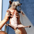 SweePee Rambo, a Chihuahua/Chinese Crested mix, is held by its owner during World's Ugliest Dog Contest. Photo / AP