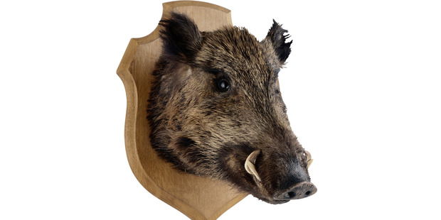 What should a polite vegetarian traveller do when faced with nothing but wild boar on the menu? Photo / Thinkstock