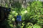 One of the railway's five trains snakes its way through the native Coromandel bush canopy. Photo / Eveline Harvey