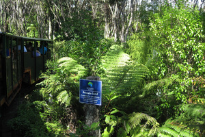 One of the railway's five trains snakes its way through the native Coromandel bush canopy. Photo / Eveline Harvey