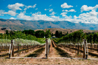 New Zealand winegrowers need to factor climate change into their forecasts. Photo / Supplied