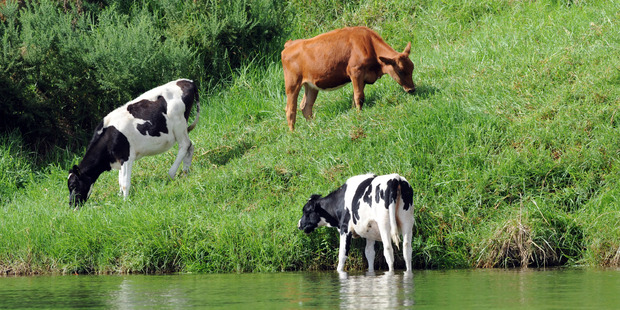 Farmers are worried that any change in government will unsettle progress made towards sustainability. Photo/Sarah Ivey