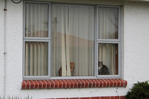 Cats sit on the windowsill at Averil Gardiner's Invercargill home. Photo / Allison Beckham, ODT