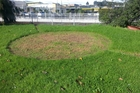 Strange crop circle appears overnight in Boston Rd. Any ideas?