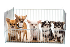 Not all pet shops are bad, but it is fair to say that some are. Photo / Thinkstock