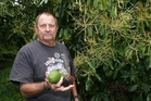 Mike Eagles says avocado growers need to be extra vigilant as fruit ripens and report any suspicious activity on orchards to police. Photo / Michael Cunningham