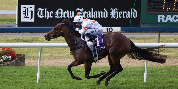 Leading Matamata sprinter Bounding will face the best Australians at the Melbourne Spring Carnival. Photo / Chris Loufte