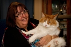 Gill Ballard's Maine coon cat Fergusson visits the sick in Waikato Hospital. Photo / Christine Cornege