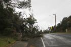 Tree down in Pukenui. PICTURE/PETRINA HODGSON