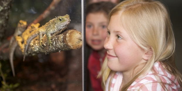 Rainbow Springs is home to a variety of wildlife, including tuatara.