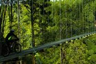 One of the suspension bridges on the Timber Trail, part of the Nga Haerenga national cycle trail between Pureora and Ongarue (near Te Kuiti and Taumarunui). Photo / Elisabeth Easther