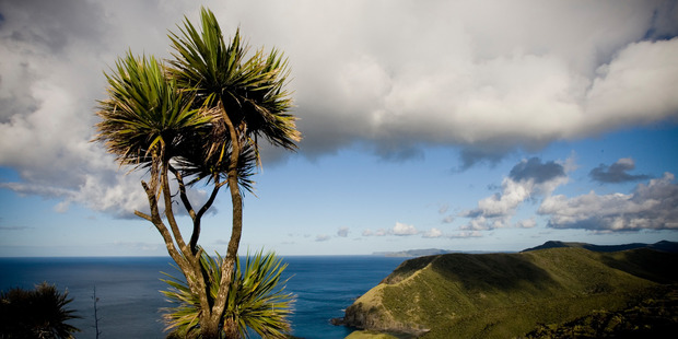 Wherever else in the world Kiwi travellers find cabbage trees, they summon instant nostalgia  for home.