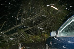 A large tree blocked the road and prevented the mother from reaching the Thames Birthing Unit. File photo / APN
