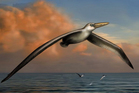An artist's impression of Pelagornis sandersi, which could fly great distances.