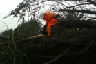 Six trees came down in this week's storm at Chris Clarke's place, 15 minutes north of Helensville, and after five hours of chainsawing, he'd only cleared out 3m of space. Photo / Chris Clarke