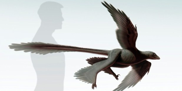 """The """"Changyuraptor Yangi"""". Image / Dinosaur Institute of the Natural History Museum of Los Angeles County/AP"""