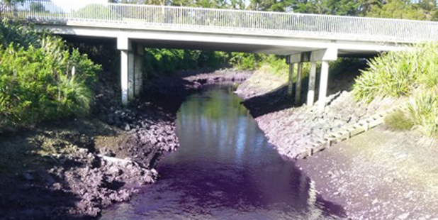 Oruarangi Stream after thousands of litres of violet dye entered the waterway.
