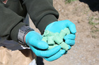 1080 bait will be dropped to stop a pest plague of 'Biblical proportions'. Photo / File