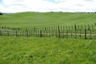 The 500 hectare Rakaiatai Farm attracted interest from around the country. Photo/File