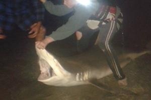 Reuben Martin with the 2m, 160kg bronze whaler shark he caught.