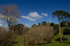 Cornwall Park provides significant amenity for more intensive housing development, says a Unitary Plan submission. Photo / Richard Robinson