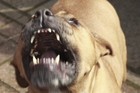 The police officer was bitten multiple times as he restrained the dog for several minutes. File photo / Thinkstock