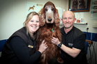 Tauranga Vet Brett Kirkland and his Practice Manager Jane McKay are happy to have Saffy the Irish Setter back.