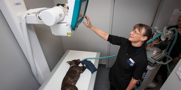 Dr Heather Jackson demonstrates Tauranga Veterinary services new digital x-ray.