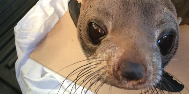 This seal pup awaits its return to its marine home.